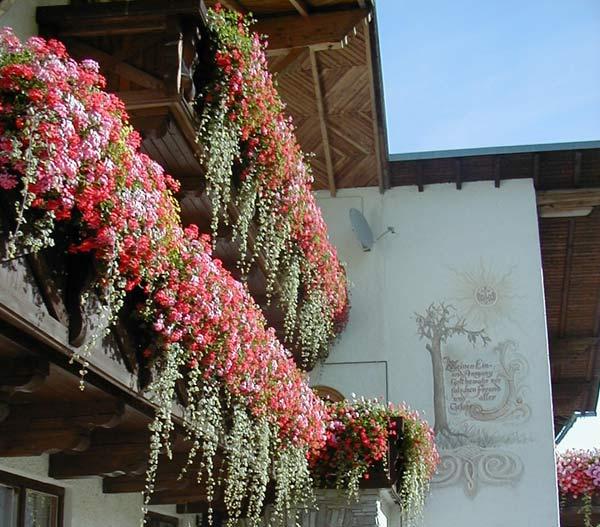 Balkonblumen - Blütenpracht Am Berghof Sturmgut - Berghof Sturmgut ... Blutenpracht Auf Dem Balkon Blumen