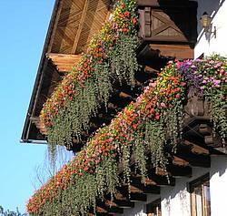 balkonblumen bl tenpracht am berghof sturmgut berghof sturmgut glossar. Black Bedroom Furniture Sets. Home Design Ideas